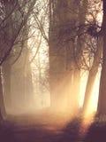 Silhouetten van paar in de mist Royalty-vrije Stock Afbeeldingen
