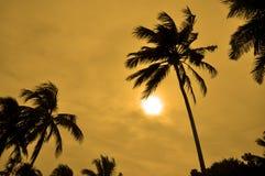 Silhouetten van Palmen tegen de zon Stock Afbeeldingen