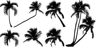 Silhouetten van tropische eenzame palmen Royalty-vrije Stock Afbeelding