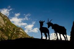 Silhouetten van twee geiten in de bergen Stock Afbeelding