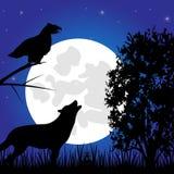 Silhouettendier in de nacht Stock Afbeeldingen