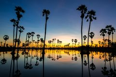 Silhouettenpalm, landschap Thailand royalty-vrije stock fotografie