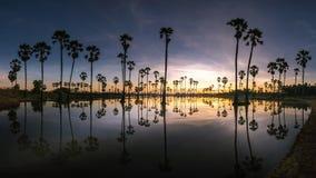 Silhouettenpalm, landschap Thailand stock foto