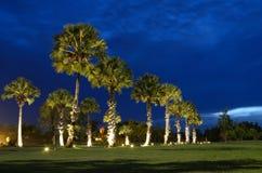 Silhouetteplamtrees på koh yao.SongKhla Royaltyfri Foto