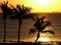 silhouettes заход солнца Стоковое Изображение RF