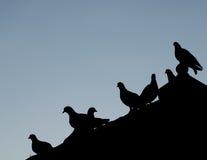 Silhouettes птица Стоковое Изображение