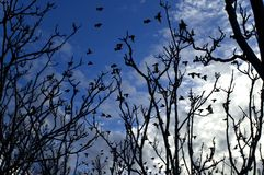 Silhouettes. Birds migration and trees silhouette Royalty Free Stock Photography