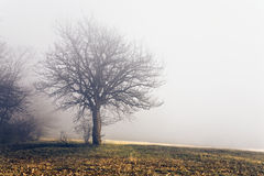 Silhouettes 2. Dreamy shot in fog wintertime Stock Photography