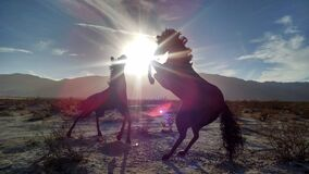 Silhouettes of 2 Horse Near Mountain during Daytime Royalty Free Stock Photography