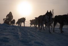 Silhouettes. International dogsled race Sedivace's long in Orlicke Hill. Traditional sleddog race in Czech Republic. Sedivacek's long sleddog race in Orlicke Stock Photography