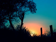 Silhouettes. Sunset moment , tree and fence silouettes stock photo