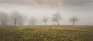 Silhouettes 5. Dreamy shot in fog wintertime Royalty Free Stock Photography