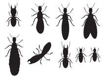 Комплект черноты silhouettes термиты Стоковое фото RF