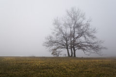 Silhouettes 7. Dreamy shot in fog wintertime Stock Photo