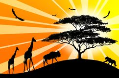 Silhouettes of africa animales on orange. Black silhouettes of africa animales on orange background Stock Images