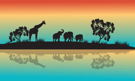 Silhouettes of african animals in morning Royalty Free Stock Images
