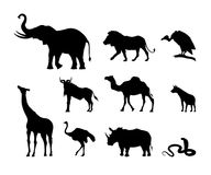 Silhouettes of African animals. Nature of Africa. Collection of black silhouettes of African animals. The nature of Africa. Elephant, rhinoceros and lion on Stock Photography