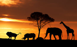 Silhouettes of African animals at sunset in the Savannah. Collage stock photo
