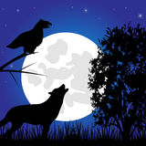 Silhouettes animal in the night Stock Images