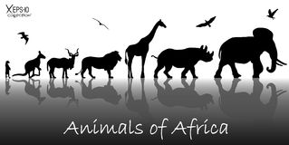 Silhouettes of animals of Africa. Vector illustration. Silhouettes of animals of Africa: meerkat, kangaroo, kudu antelope, lion, giraffe, rhino, elephant and Stock Photography