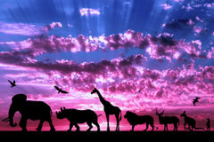 Silhouettes of animals on purple cloudy sunset Stock Photos