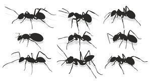 Silhouettes of ants. Stock Image