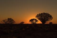 Silhouettes au coucher du soleil des arbres de tremblement et roches chez Garas Photographie stock libre de droits