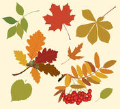 Silhouettes of autumn leaves. Stock Photos
