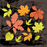 Silhouettes of autumn leaves. Royalty Free Stock Photography