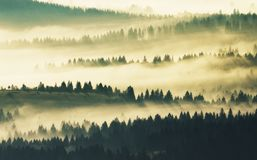 Silhouettes av berg dimmig morgon för höst Gryning i Carpathiansna Arkivfoton