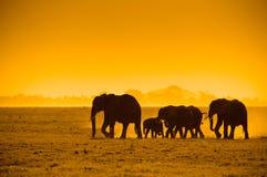 Silhouettes av elefanter Arkivfoto