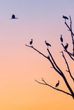 Silhouettes av fåglar Royaltyfri Foto