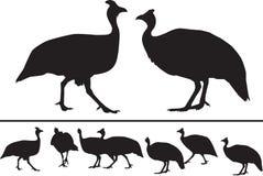 Guinea fågelsilhouettes Arkivfoton