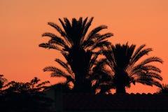 Silhouettes av palmträd på solnedgången Royaltyfria Foton