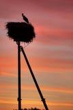 Silhouettes av storken royaltyfria foton
