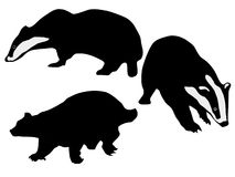 Silhouettes of badgers Stock Photo