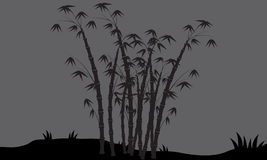 Silhouettes of bamboo in fields Stock Photo