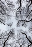 Silhouettes of bare trees Stock Images