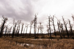 Silhouettes of bare trees against a stormy sky Stock Photography