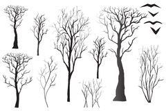 Silhouettes of bare trees Stock Photos