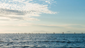 Silhouettes of beautiful couple with sup serf. Silhouettes with sup surfing and paddle on the sea of Japan Stock Image