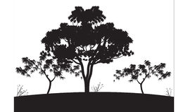 Silhouettes of big tree. On the hills Stock Photo