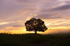 Silhouettes, big trees in the meadow, and beautiful sky. Royalty Free Stock Image