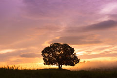 Silhouettes, big trees in the meadow, and beautiful sky. Stock Photos