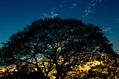 Silhouettes of big trees on sky. Royalty Free Stock Photography