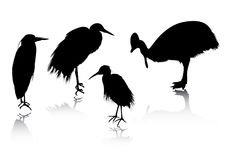 Silhouettes bird Royalty Free Stock Image