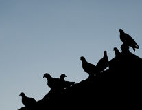 Silhouettes bird. Abstract silhouettes group of birds perched on a roof stock image