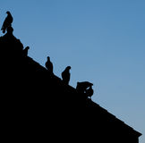 Silhouettes bird. Abstract silhouettes group of birds perched on a roof Stock Images