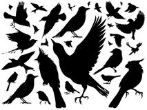 Silhouettes of birds. Set of silhouettes of various small birds. Some of them fly, and others sit Royalty Free Stock Photos