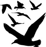 Silhouettes of birds. Some silhouettes of seagulls flying royalty free illustration